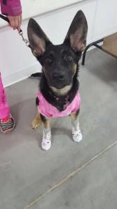 Ava enjoys her puppy socialization class.